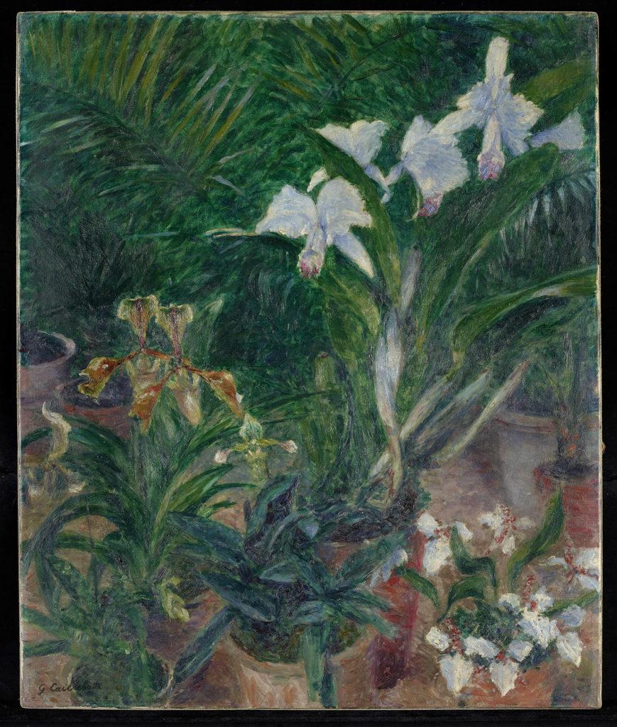 Gustave Caillebotte, Orchidées dans la serre