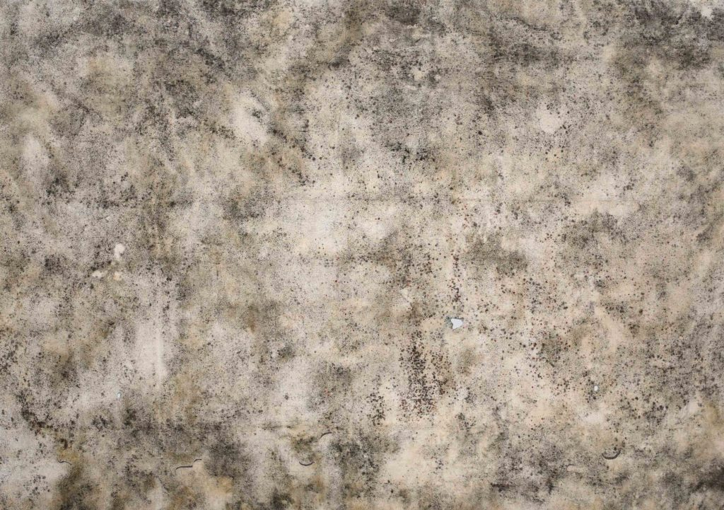 Sidival Fila, 2020, Senza Titolo 01 -serie muffe, courtesy Galerie Poggi